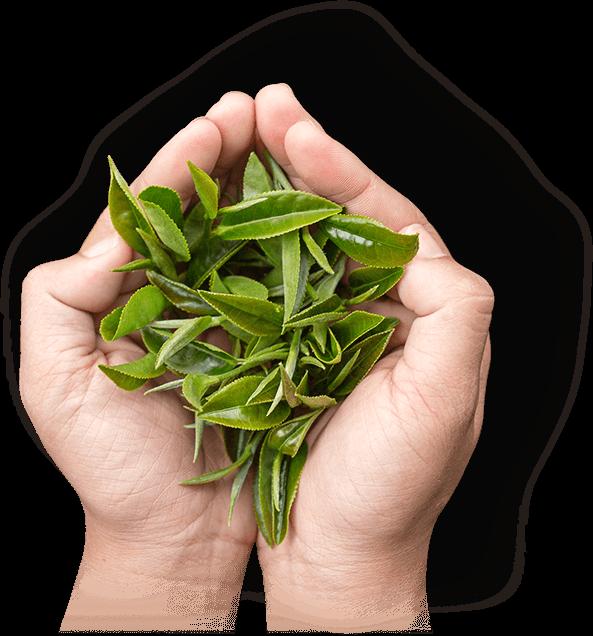 100% 客製化茶包/茶品生產服務